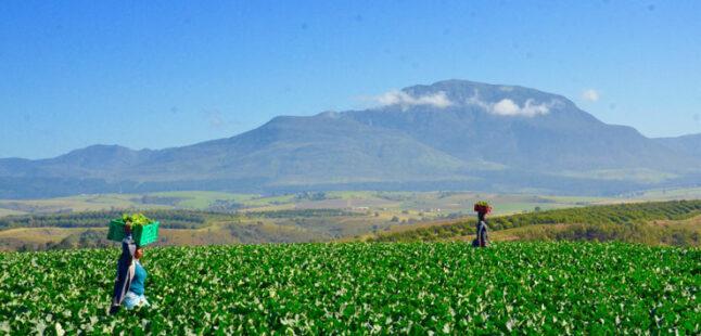 Southern Cape Veggies